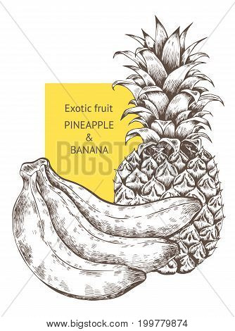 Pineapple banana fruit. Hand drawn vector sketch. Background, wallpaper, backdrop pattern