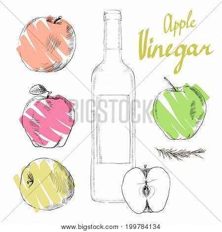 Apple cider vinegar in the bottle vector, outline. A set of glass bottles decanters with Apple cider vinegar, spice for cooking. The fruit of the Apple which is Apple cider vinegar.
