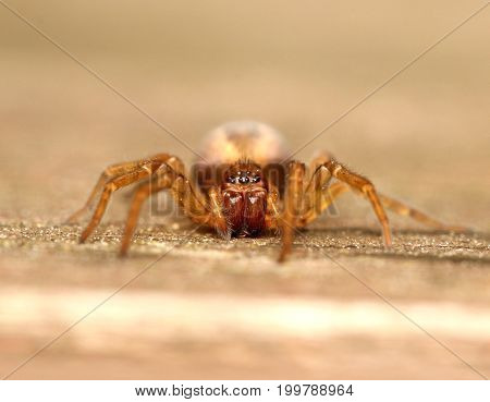 Just a grisly little spider in close-up