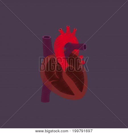 flat shading style icon heart anatomical human