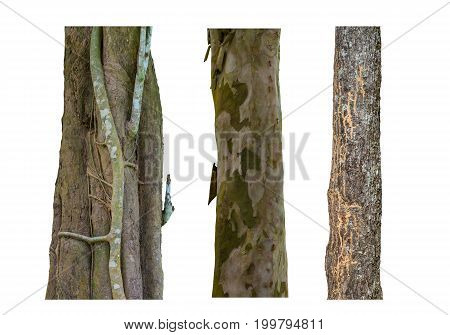 set of tree trunks isolated on white background texture of bark wood use as natural background