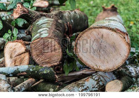 Deforestation / The devastation of forests in Brazil