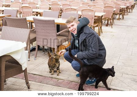 Homeless cat, pet and animals concept - Man caress street cats.