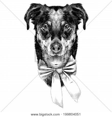 French shepherd dog head sketch vector graphics monochrome black and white bow holiday new year