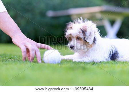 Playful, Cute Puppy Playing Fetch With Owner