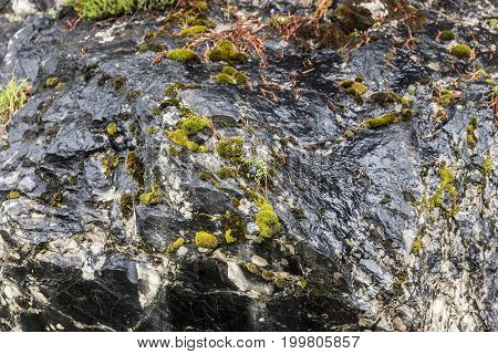 Dark smooth stone rock with green moss