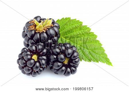 BlackBerrys with leaf isolated closeup on white background.