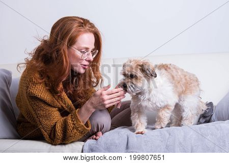 Beautiful red-haired woman educates her dog on the couch