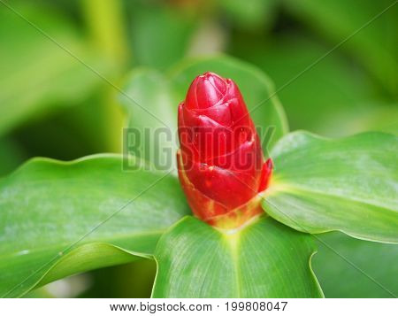 close up red flower and green blur leaf background.