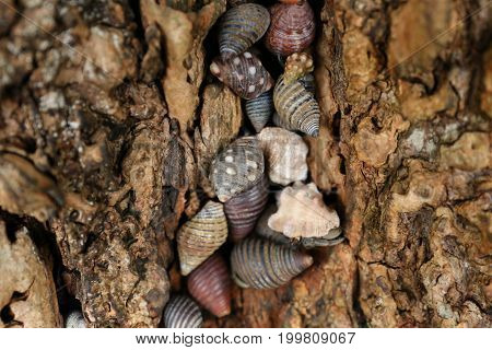 On a tree - lots of colorful Sea Shells in each of it lifs a crayfish