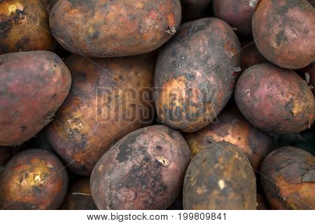 Photo of freshly dug potatoes, close up