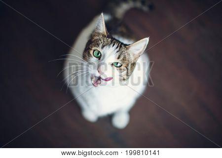Cat at home. Pets