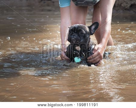 Hands person bathe the dog in the lake. The dog is unhappy in the water droplets.