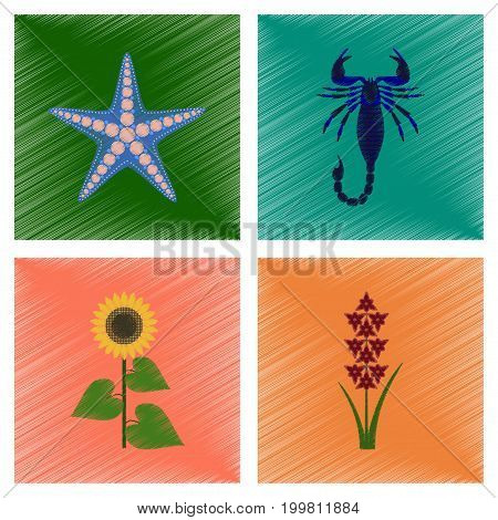 assembly flat shading style illustration of starfish Scorpio sunflower gladiolus