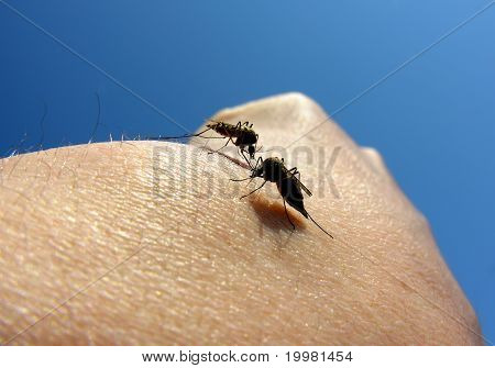 mosquitoes attack