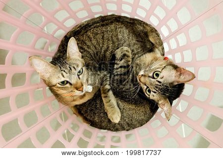 two adorable Cats lying in basket. Lovely Couple family friends sisters time at Home. kittens cuddle snuggle together.