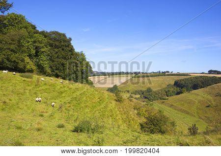 Hillside Meadows