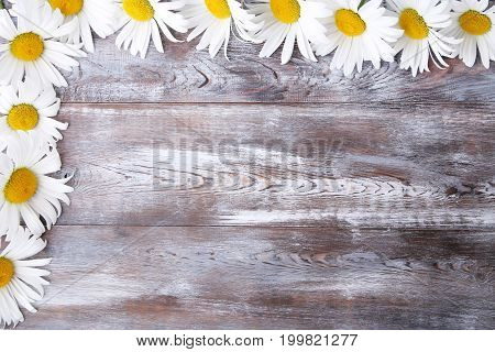 Chamomile flowers on the brown wooden table