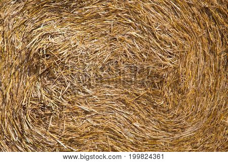 Round bale of straw close-up. Straw texture.