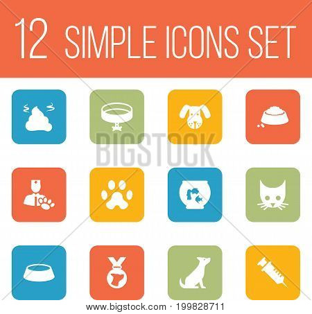 Collection Of Head, Injection, Dish And Other Elements.  Set Of 12 Mammal Icons Set.