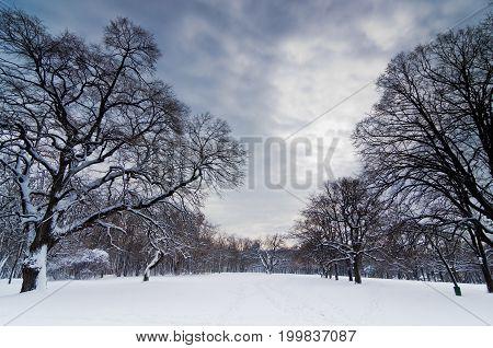 Snow path through forest clearing under heavy winter clouds, Kosutnjak forest, Belgrade, Serbia