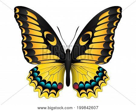Beautiful butterfly isolated on a white background. Madagascar emperor swallowtail butterfly. 3D illustration