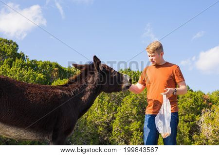 man caressing and feed a donkey in nature