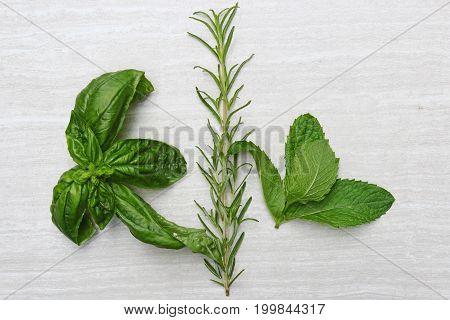 Freshly picked herbs of Mint Rosemary Basil