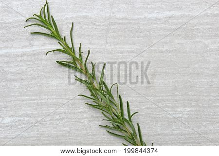Freshly picked herb Rosemary on a stone background with copy space