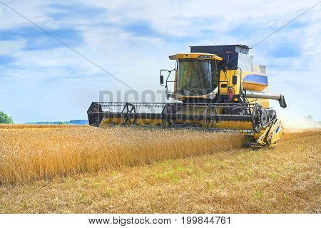 View on yellow working wheat harvester combine machine on gold wheat fields in summer. August wheat harvesting in Russia, Europe. Rye harvester on gold wheat fields and blue sky
