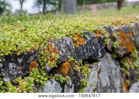 Medieval Stone Fence And Green Grass In Gamla Uppsala Village, Uppland, Sweden