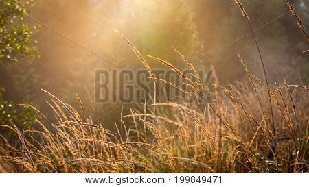 abstract autumn grass on meadow in sunlight