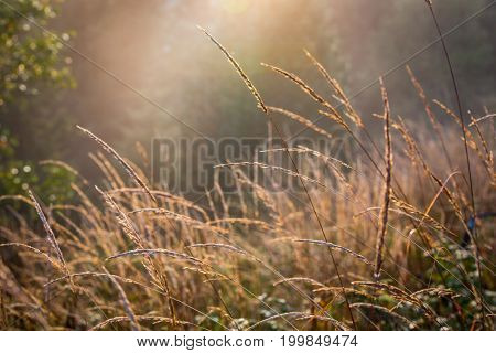 abstract grass in Sunlight on autumn meadow