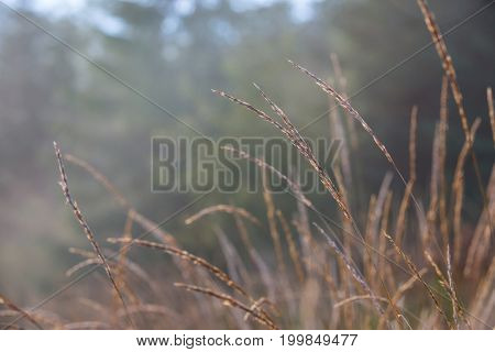 soft autumn grass on morning meadow