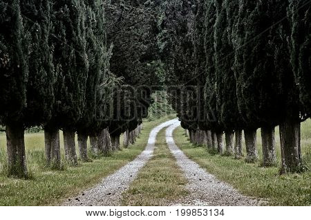 Photo of Cypress tree road a way Tuscany Lari