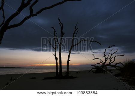 A cloud laden sky meets the rising sun over the Atlantic Ocean and above the silhouettes of dead trees on the north beaches of Jekyll Island, Georgia