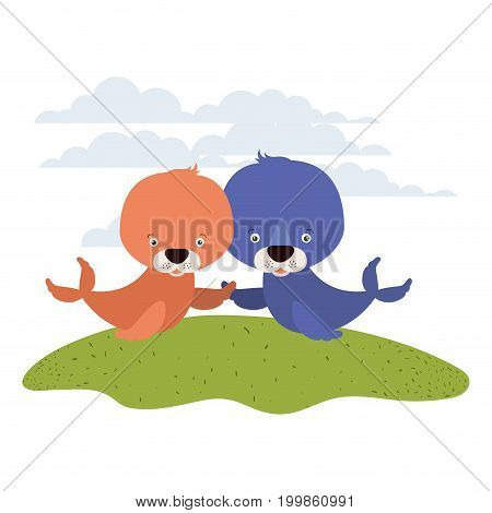 white background with color scene couple cute seals aquatic animals in grass vector illustration