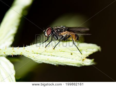 Fly on a green leaf in the open air .