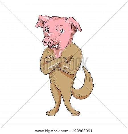 Illustration of a pig head with a dog body standing with arms crossed viewed from front set on isolated white background done in cartoon style.