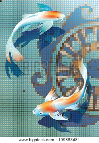 Vector illustration of koi carps couple in pool