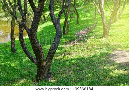 chair in trees park with beautiful light concept: rainy season hope new day fresh relaxation