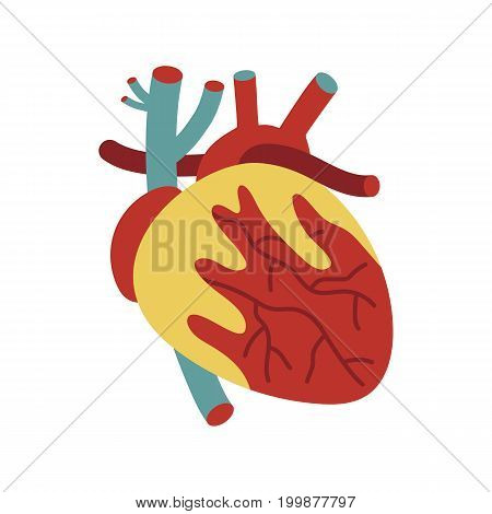 Human heart icon in cartoon style. Body anatomy element, health medical sign, internal organ, human body physiology isolated on white background vector illustration.