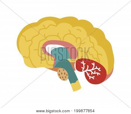 Human brain icon in cartoon style. Body anatomy element, health medical sign, internal organ, human body physiology isolated on white background vector illustration.