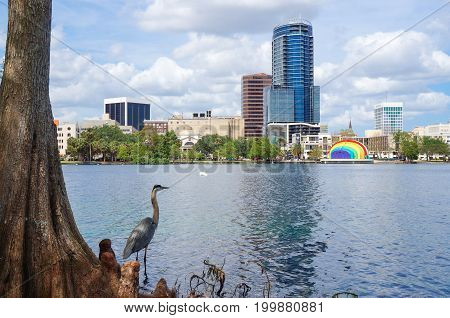 Great Blue Heron, skyscrapers and Amphitheater, at Lake Eola, downtown Orland, April 26, 2017