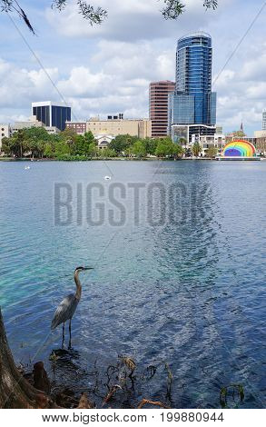 Great Blue Heron, skyscrapers and The Disney Amphitheater, at Lake Eola, downtown Orland, April 26, 2017