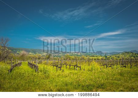 Napa Valley Autumn Vineyards Mountains Sunset and Blue Sky