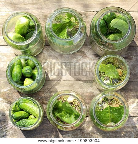 salting fresh cucumbers in jars with green leaves of horseradish garlic and dill top view / Rustic cooking recipe