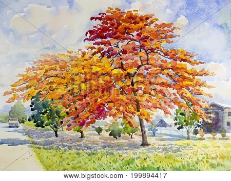 Watercolor painting original landscape red orange color of peacock flowers tree with the wooden house in sunshine and cloud background