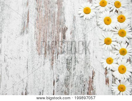 Border With Camomile