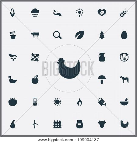 Elements Livestock, Pitcher, Chicken And Other Synonyms Livestock, Sun And Pounder.  Vector Illustration Set Of Simple Nature Icons.